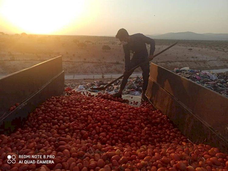 Çürümüş domatesleri salça yapıp satacaklardı