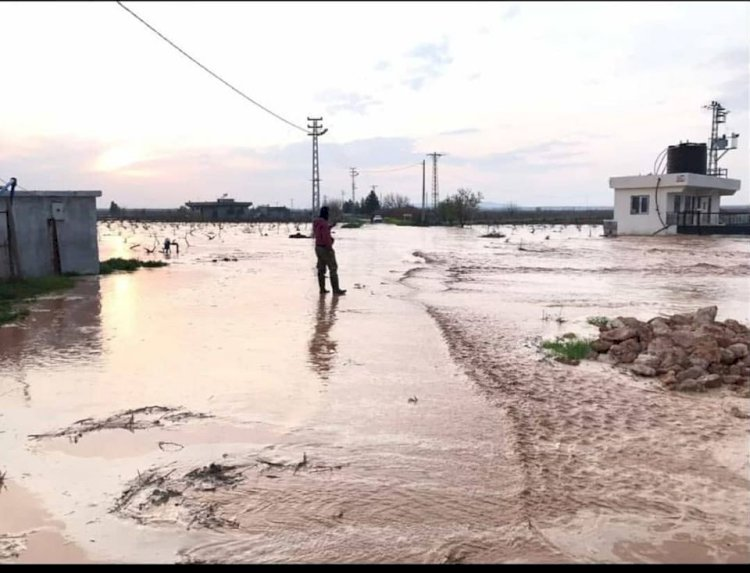 Nizip ve Karkamış'ta sel tarımı etkiledi