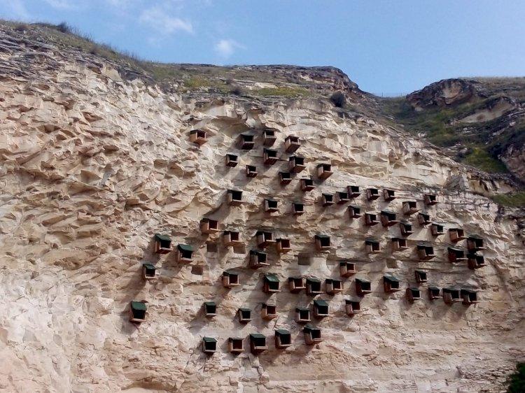 Birecik'te 241 kelaynak doğaya salındı