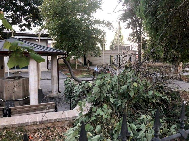 Pavlonya ağacı cami avlusunda şadırvanın üzerine devrildi